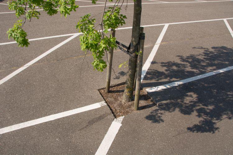 Asfalt gereed, gat erin en boom erin. Een uitgesproken klimaatboom zal het hier evenmin fijn vinden.