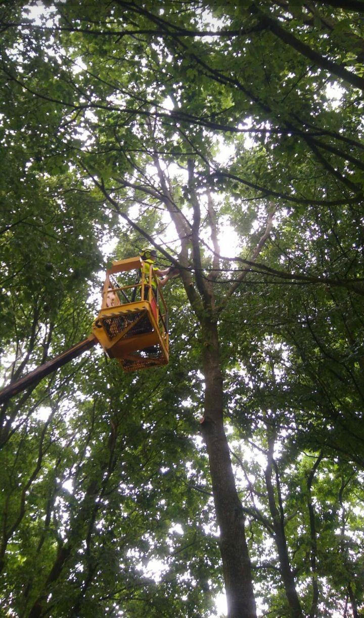 ETW-aspirant Nelleke Dijkstra, die de opleiding tot boomverzorger bij Helicon Velp heeft gedaan, aan het werk