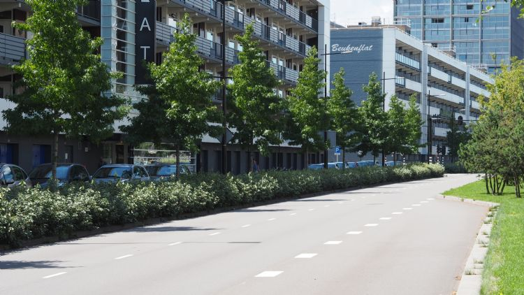 Tussen Den Dungen en Den Bosch staan 600 eiken met een diktegarantie voor drie jaar na oplevering
