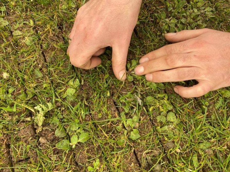 Doordat er in de lengte en breedte van het veld gereden wordt, is het onkruid nooit groter dan vier centimeter.