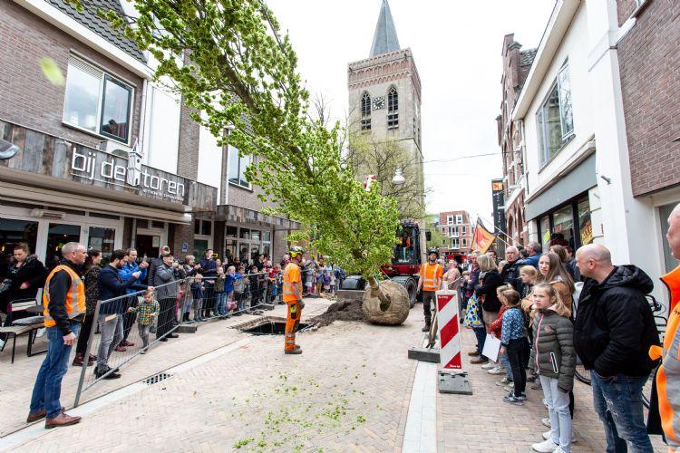 Onder grote belangstelling wordt de eerste van elf bomen geplaatst in Ede.