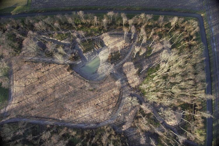 Dronefoto van het bos