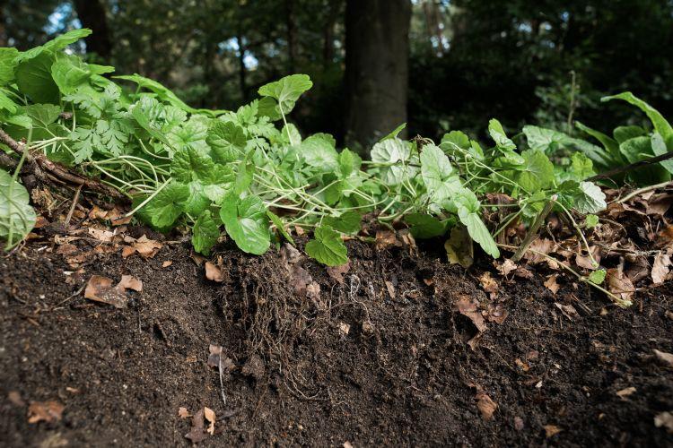 De sensoren van Treemania meten het bodemleven