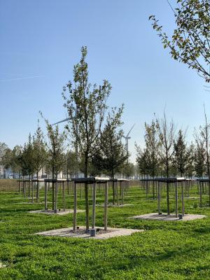 Foto van de granulaatproef. Foto: Bomenwacht Nederland