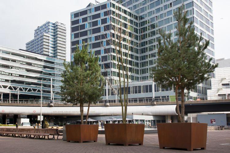 Bomen Anna van Buerenplein beeld Jurriaan Brobbel