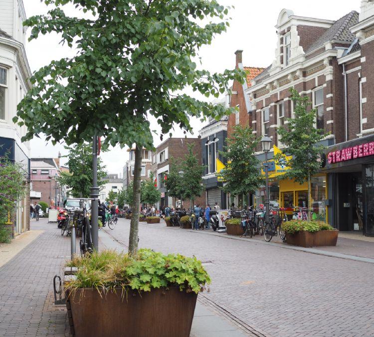 De Westzijde in Zaanstad Bron: Boomkwekerij Udenhout