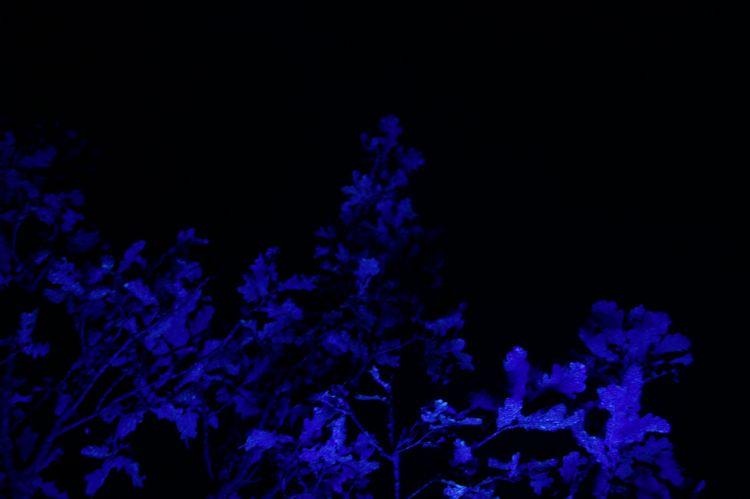 In een tweede proef, begin november, heeft Wolterinck met de EPRS Prevent 460 met fluorescerende stoffen het spuitpatroon getest bij verschillende boomhoogten en verschillende snelheden