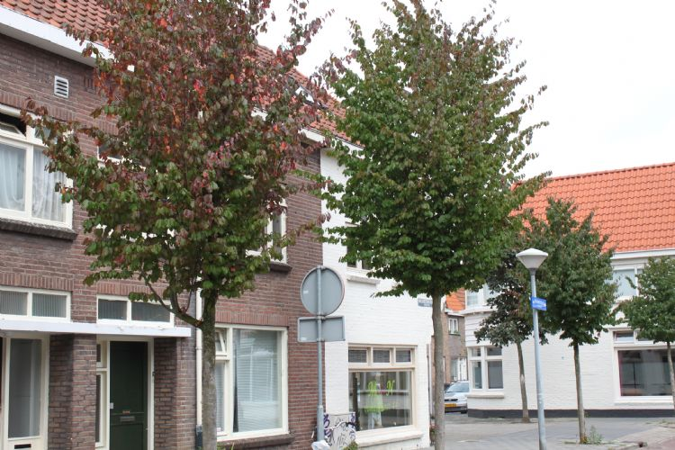 Foto: Boomkwekerij Udenhout