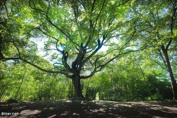 Foto: SBNL Natuurfonds