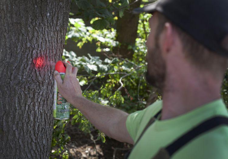 Zieke en broedbomen worden gemarkeerd met een rode stip.