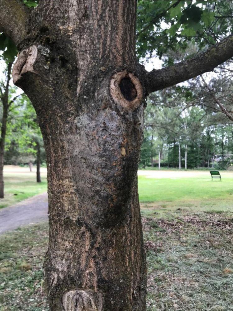 Een gefixeerd nest op Golfbaan Scherpenbergh