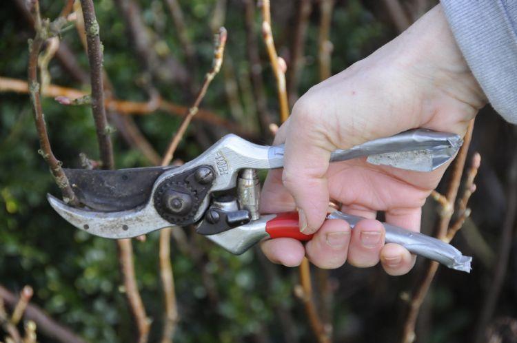 Bomenwacht Aanbestedingen bv richt zich op aanbesteding op het gebied van bomen voor Nederlandse overheden.