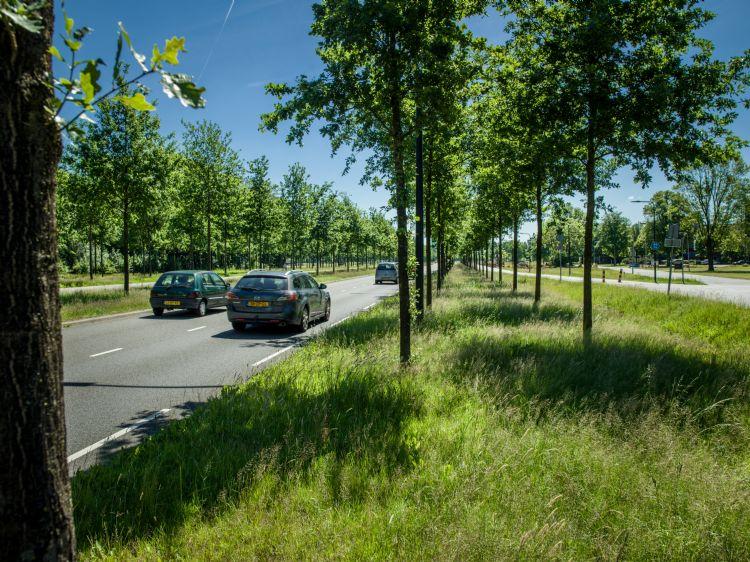 Bomengrond doet zijn werk op deze locatie in Enschede.