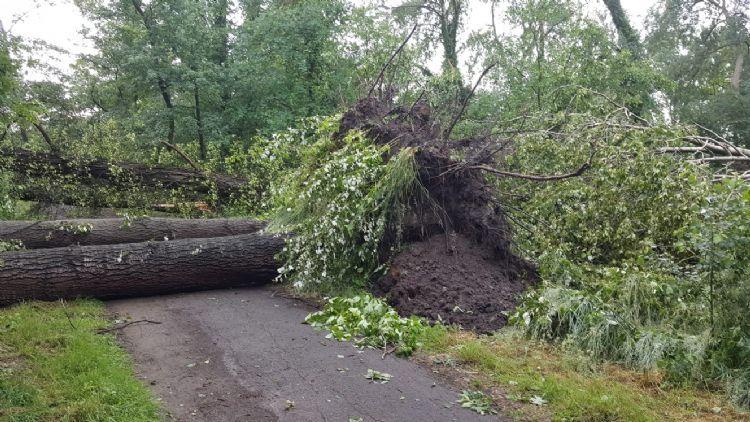 Een omgevallen boom. Foto: Weijtmans