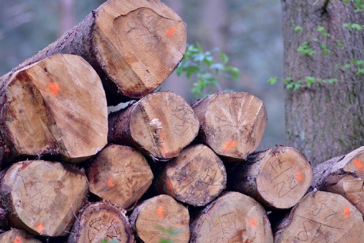 21 bomen zijn zonder vergunning gekapt