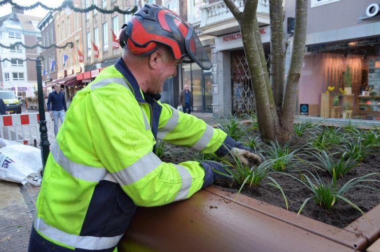 Medewerker van firma Zoontjens brengt onderbeplanting aan in boombakken in gemeente Roermond