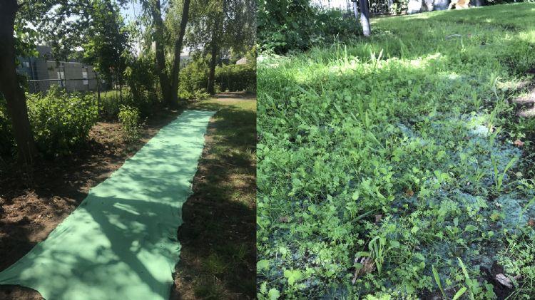 Voor en na de plaatsing van de Turfquick-dekens van Greenmax