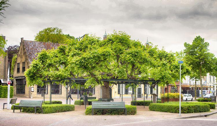 De Moeierboom in Etten-Leur was een de laatste 14 finalisten. Foto: Egon Zitter