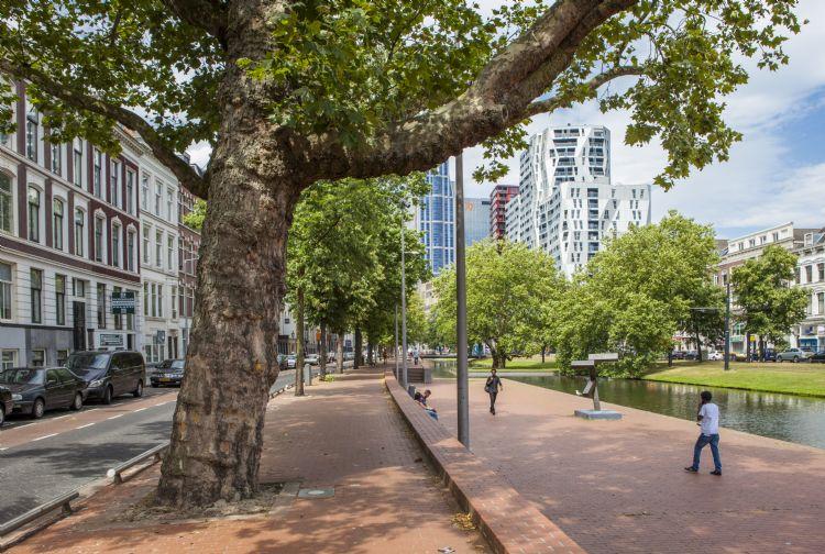 Foto: Bomenwacht Nederland
