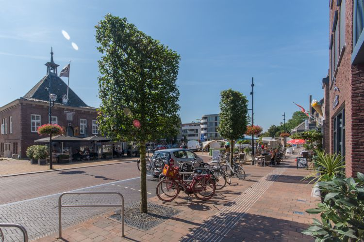 Acer campestre 'Zorgvlied' in het centrum van Heesch