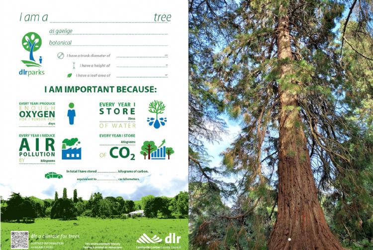 De Ierse TreeTag en één van de bomen in Fernhill Park: een Sequoiadendron gigantum met een stamdiameter van 138 cm en hoogte van 32 meter.
